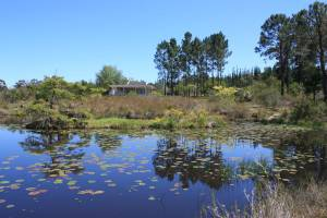 Gouna Forest, Knysna, hiking, trails,mountail biking, naute