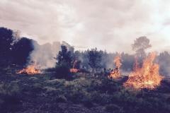 Knysna Forest - Controlled Burn